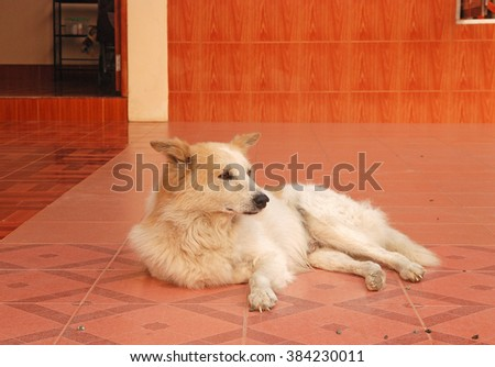 Old dog - stock photo