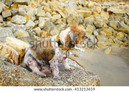 Old dog sits on brown stone after sea bathing with blurry brown stone background:select focus with shallow depth of field. - stock photo