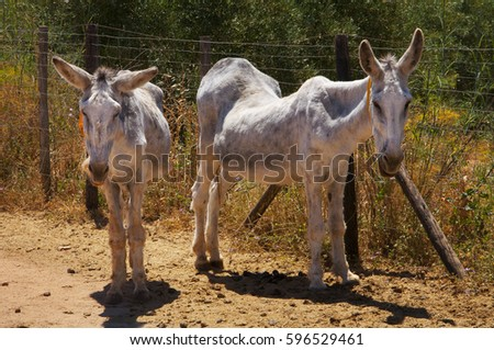 Old donkeys rescued inanimal protection farm