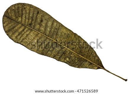 Old dry long leaf with isolated white background