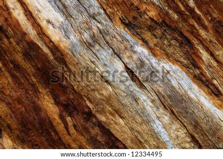 Old dry tree bark texture - stock photo