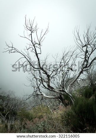 Old dry tree in fog toned - stock photo