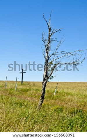 old dry tree on meadow - stock photo