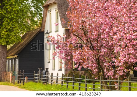 Old Dutch farm surrounded by blossom fruit trees in the Betuwe area
