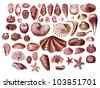 Old engraving collection of exotic sea shells - stock photo