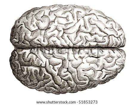 Brain Drawing Top View of Human Brains Top View