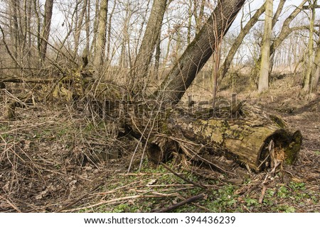 old fallen and decaying tree trunk in the forest
