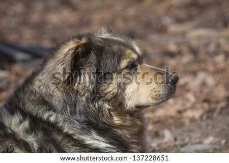 Old farm dog resting in the woods on a beautiful spring day - stock photo