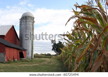 Old farm scene with red barn,silo,row of corn plants. - stock photo