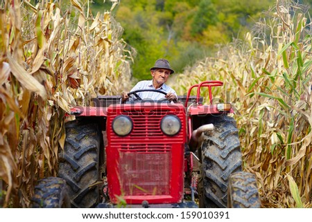 Old farmer driving the tractor in the cornfield at the corn harvest - stock photo