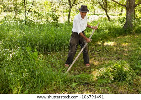 Old farmer mowing the lawn near the forest with a vintage scythe - stock photo