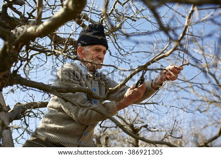 Old farmer trimming the trees with a scissor, traditionally