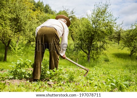 Old farmer with a hoe weeding in the garden - stock photo