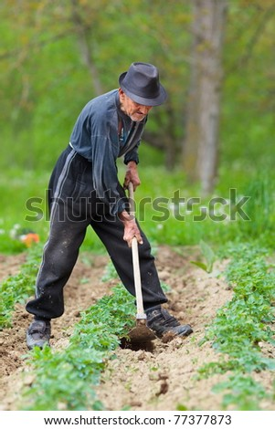 Old farmer with hat weeding through a potato field - stock photo