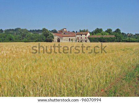 old farmhouse in Tuscany with a field of wheat