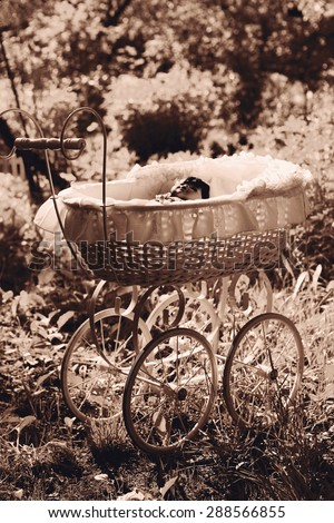 old fashion pram with doll on the summer garden background - stock photo