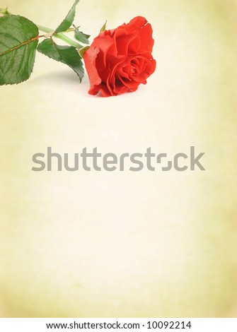 old-fashioned background with decorative rose motif - stock photo