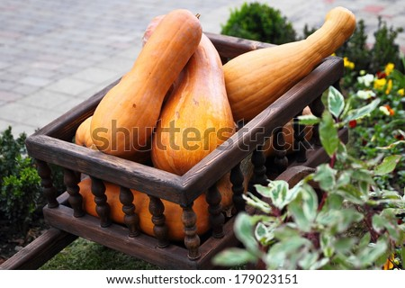 Old fashioned wagon full of pumpkins, close up - stock photo