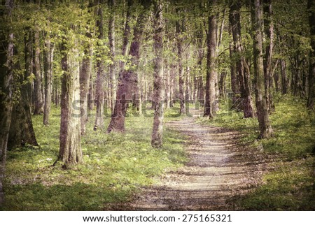 old forest photo - stock photo