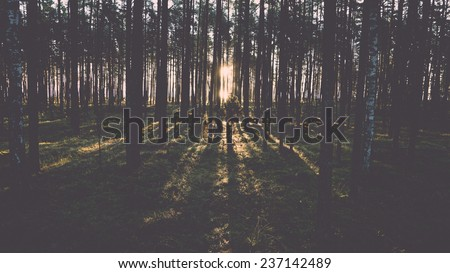 Old forest with moss covered trees and rays of sun in summer - retro, vintage style look - stock photo