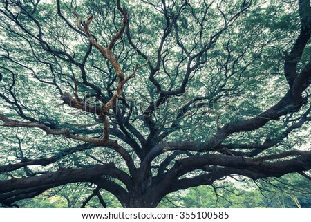 Old giant rain tree in old tone - stock photo
