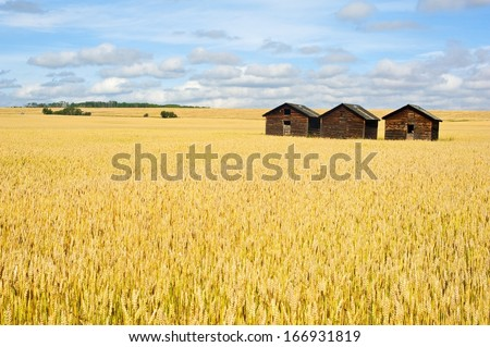 old granaries in a field of wheat - stock photo