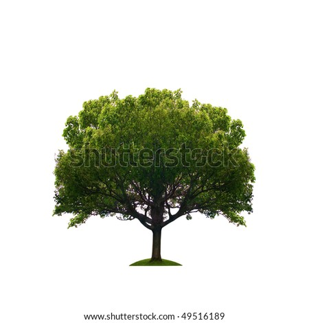 Old green tree isolated - stock photo