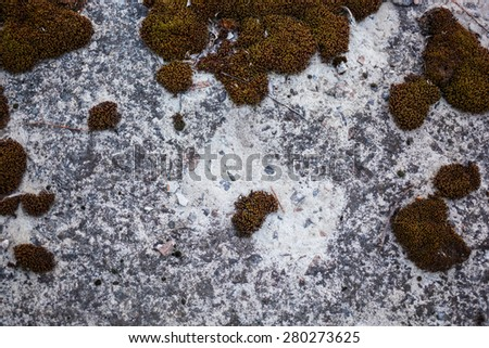 Old grey concrete surface overgrown with moss. - stock photo