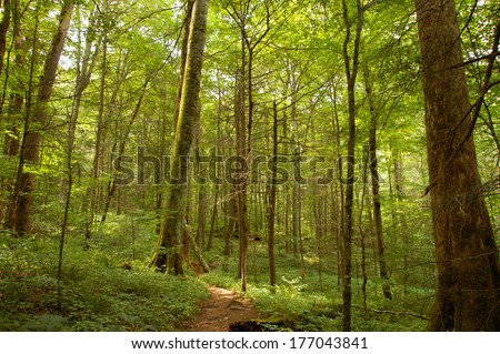 Old Growth Forest - Graham County, North Carolina, United States - stock photo