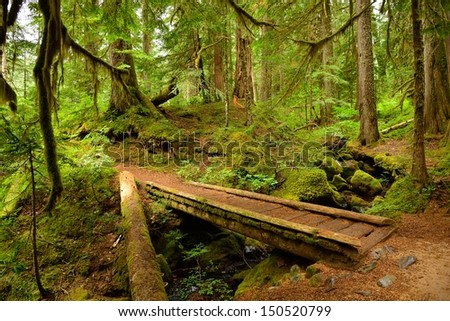 Old-growth lush forest and small wooden bridge, Mount Rainier National Park - stock photo