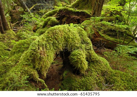 Old growth temperate rainforest, in the Tongass National Forest, Southeast Alaska - stock photo