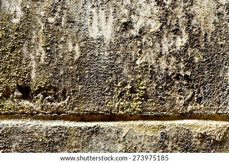 Old grunge concrete wall cover by Lichen