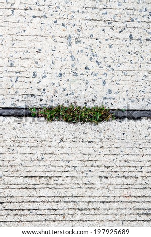 Old Grunge Rustic Cement Pavement and Pebble with Tree Weed in Asphalt Background and Texture. - stock photo