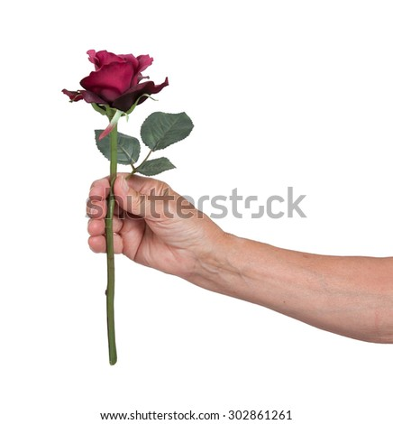 Old hand giving a rose, isolated on white