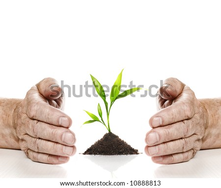 Old hands and young plant between them. Isolated on white background - stock photo