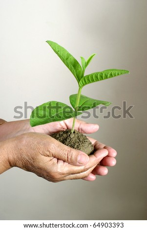 Old hands holding new sapling, Environment theme - stock photo