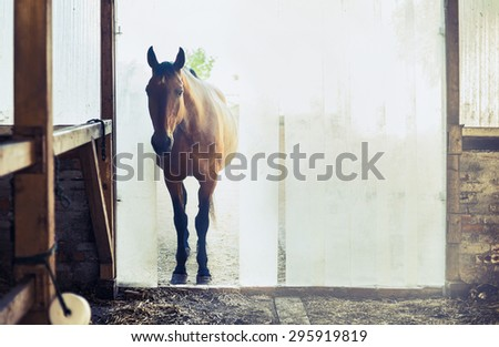 Old horse at the entrance to the stables with vertical blinds - stock photo