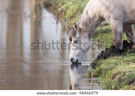 Old horse drinking from a stream - stock photo