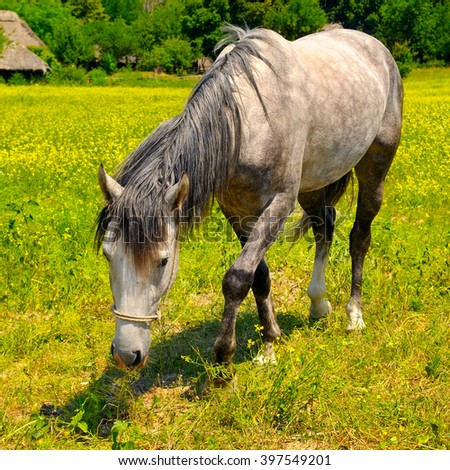 old horse grazing in a meadow - stock photo