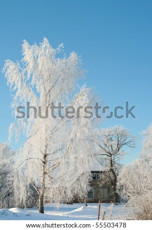Old house and trees in winter - stock photo