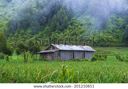 Old House at Paddy Field Ranu Pane, base-camp at Semeru Volcano Mountain, East Java, Indonesia. Semeru Mountain also known as Mahameru Mountain in Indonesia means the great mountain.  - stock photo