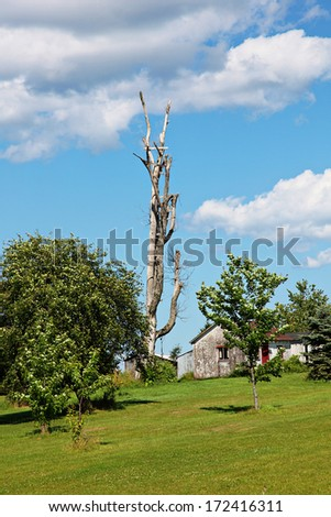 Old House on Farm with old tree in Yard - stock photo