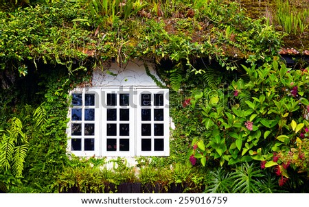 old house overgrown with beautiful plants and flowers. Cameron Highlands, Malaysia - stock photo