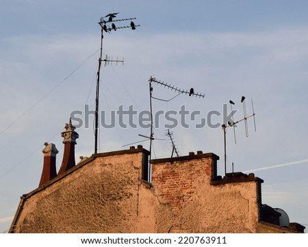 Old house roof silhouette with birds and antennas at dawn - stock photo