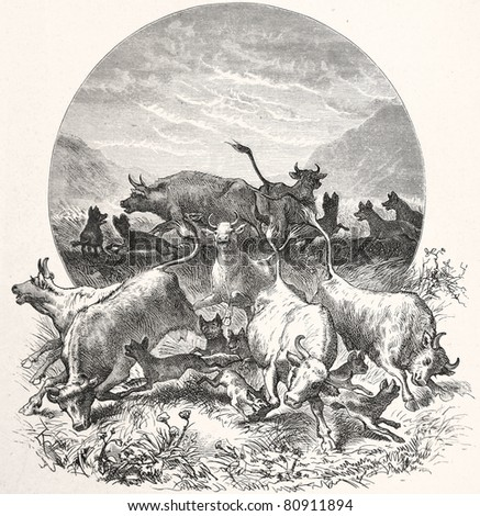 "Old illustration depicting hyenas attack a herd of cattle in South Africa in 1880, drawn by Karl Liebscher in Emil Holub's ""Seven Years in South Africa"", published in Vienna, 1881 - stock photo"