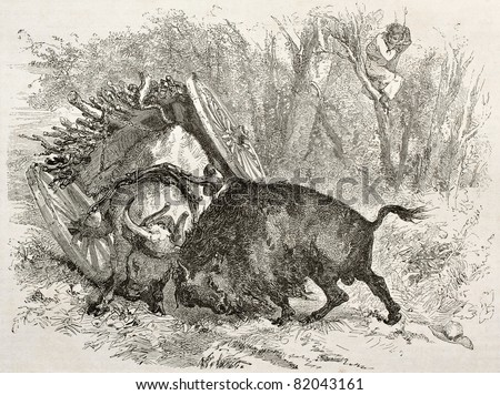 Old illustration of a bull fighting against a buffalo. Created by Morin after Palliser, published on Le Tour du Monde, Paris, 1860