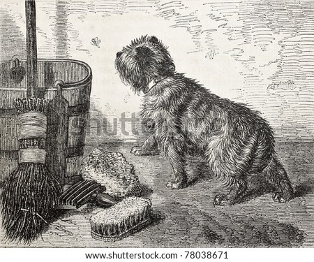Old illustration of a dog near the broom. Created by Stevens, published on L'Illustration Journal Universel, Paris, 1857 - stock photo