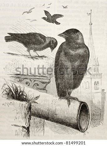 Old illustration of a Jackdaw (Coloeus monedula). Created by Kretschmer, published on Merveilles de la Nature, Bailliere et fils, Paris, 1878 - stock photo