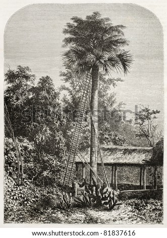 Old illustration of a palm tree in Grand Andaman, Indian ocean. Created by De Bar, published on Le Tour du Monde, Paris, 1860 - stock photo