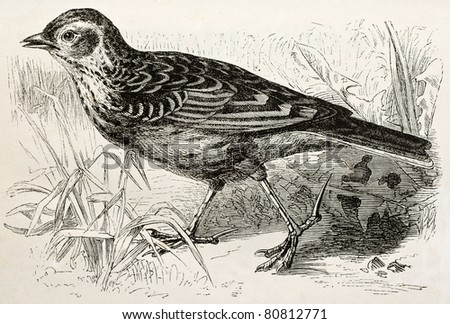 Old illustration of a Skylark (Alauda arvensis). Created by Kretschmer, published on Merveilles de la Nature, Bailliere et fils, Paris, 1878 - stock photo